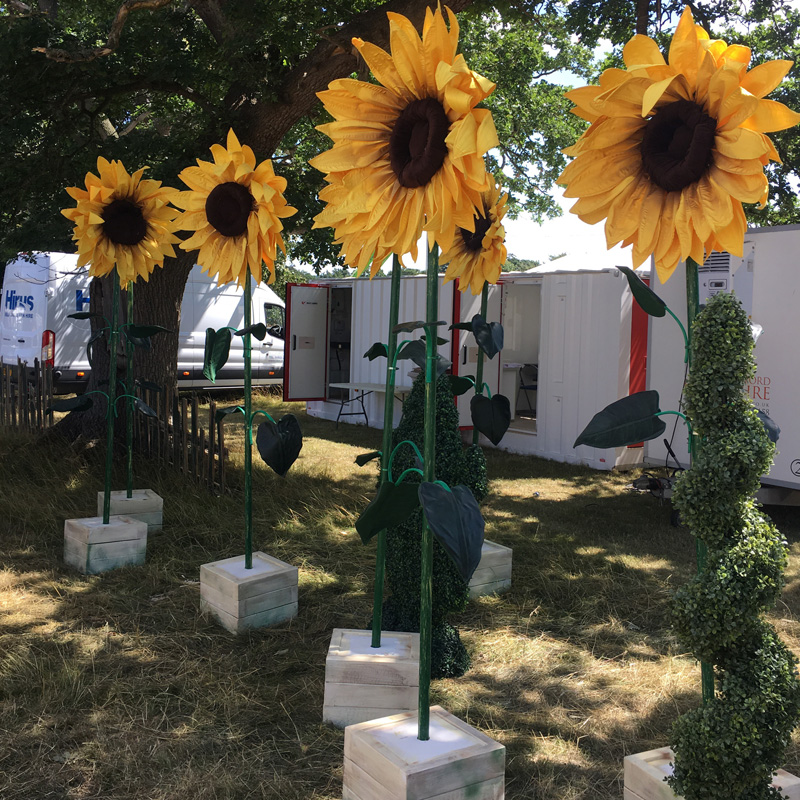 Giant Sunflower in White Planter