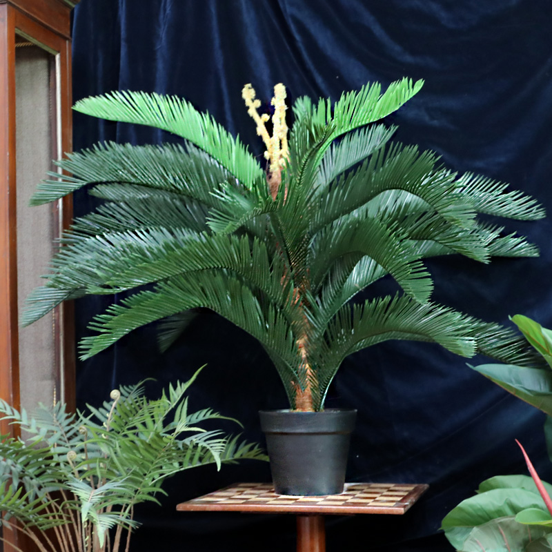Cycas Plant Artificial