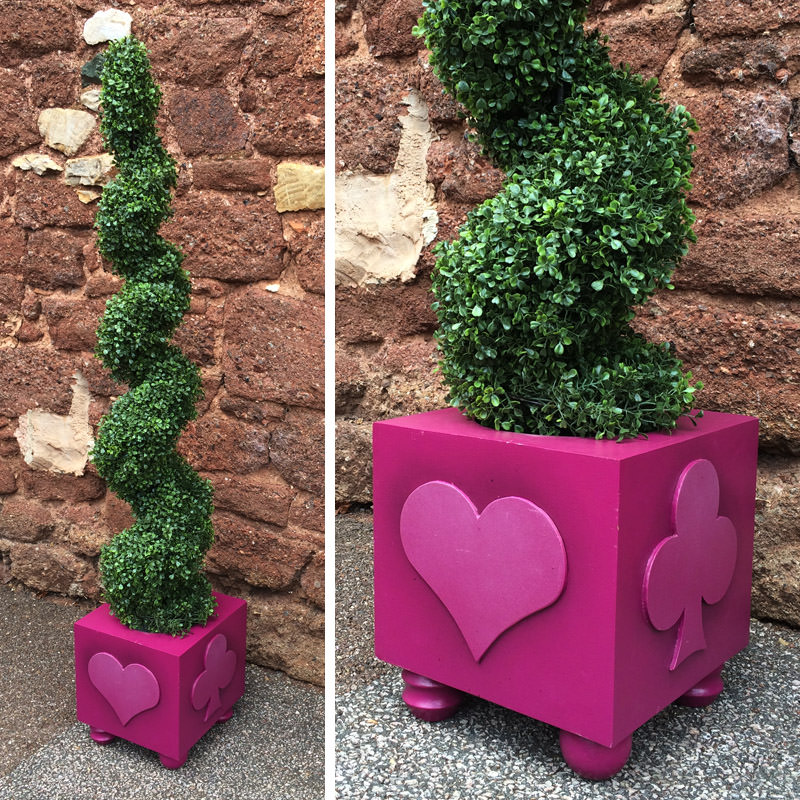 Corkscrew Topiary Tree